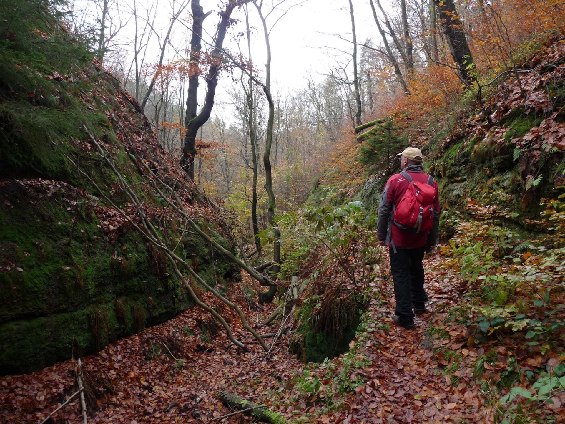 Wilde, unberührte Natur in der Landgrafenschlucht